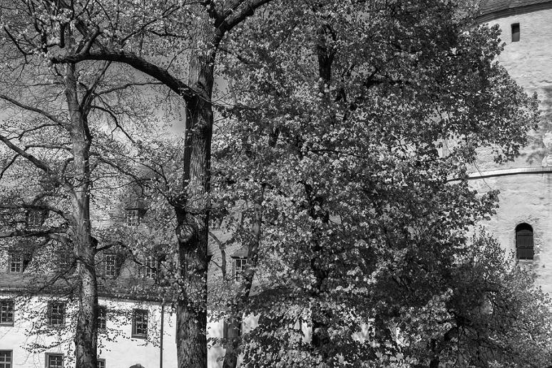 Altenburg Nikon 1 V1